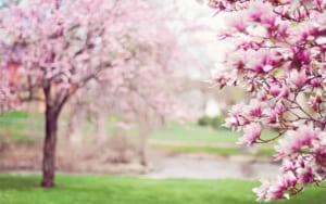 は いつから 春休み 2019年度【小学校の春休みはいつからいつまで?】小学生の春休みの過ごし方&新学期の準備方法